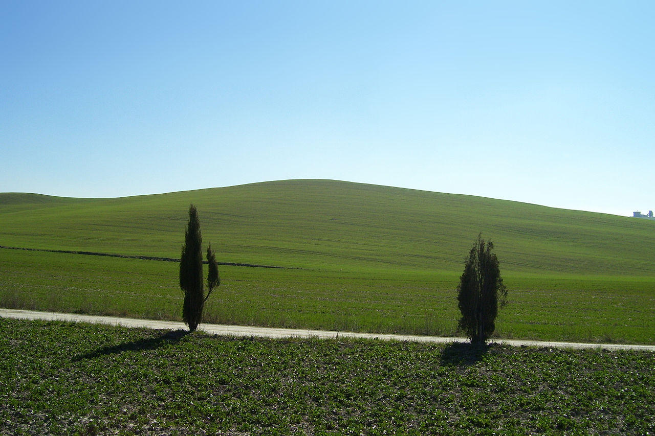 Hilly landscape in Val d'Orcia