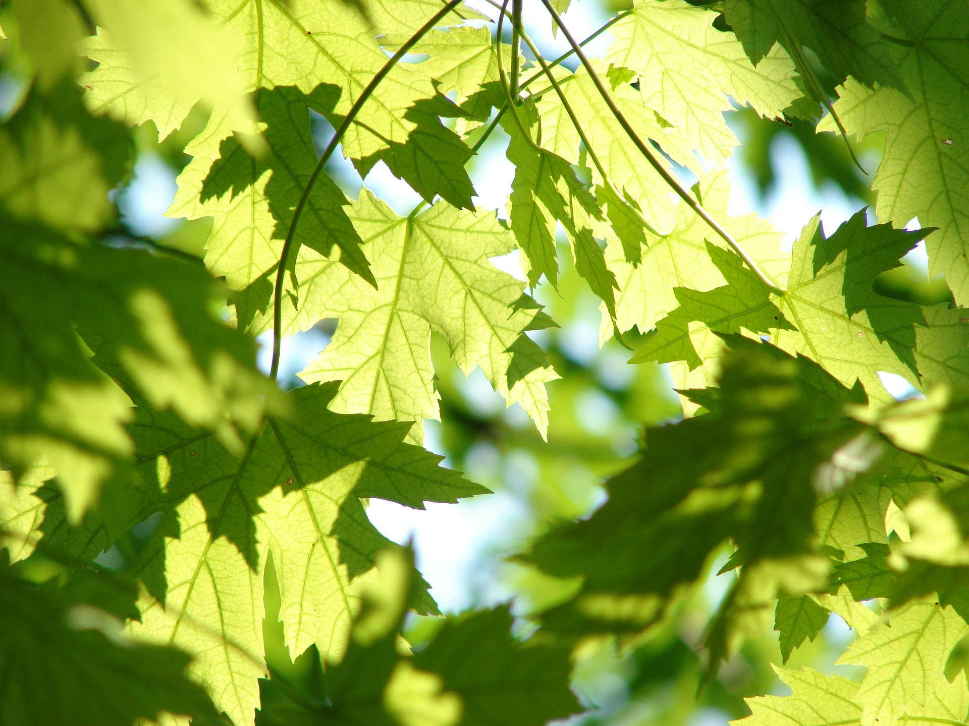Sunlight filtering through the leaves of a tree